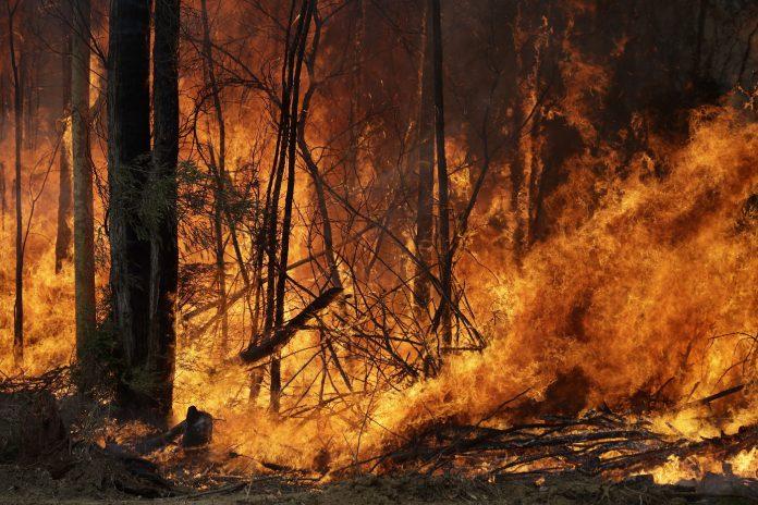 Emergenza Incendi in Australia